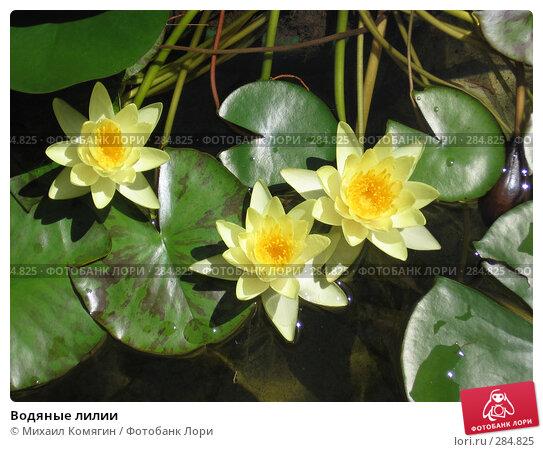 Купить «Водяные лилии», фото № 284825, снято 7 августа 2005 г. (c) Михаил Комягин / Фотобанк Лори