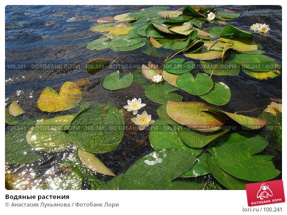 Водяные растения, фото № 100241, снято 21 июля 2007 г. (c) Анастасия Лукьянова / Фотобанк Лори