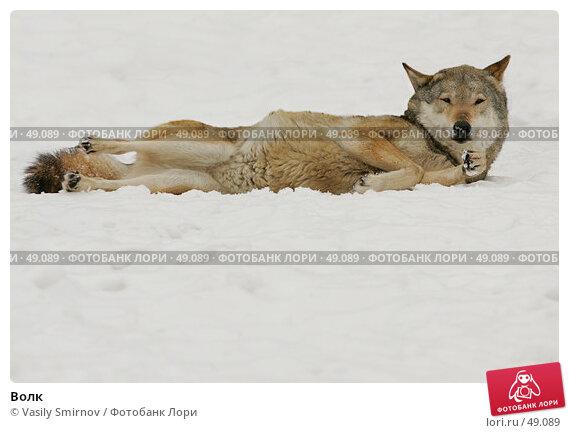Волк, фото № 49089, снято 25 марта 2005 г. (c) Vasily Smirnov / Фотобанк Лори