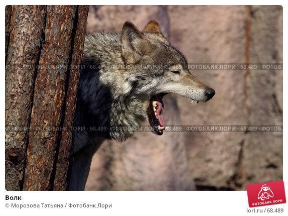 Волк, фото № 68489, снято 12 апреля 2006 г. (c) Морозова Татьяна / Фотобанк Лори