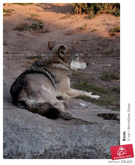 Волк, фото № 335653, снято 2 октября 2005 г. (c) sav / Фотобанк Лори
