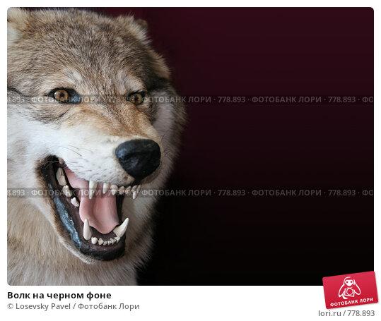 Купить «Волк на черном фоне», фото № 778893, снято 23 апреля 2019 г. (c) Losevsky Pavel / Фотобанк Лори