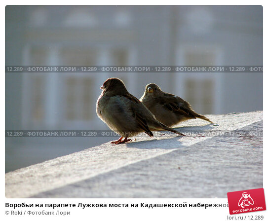 Купить «Воробьи на парапете Лужкова моста на Кадашевской набережной», фото № 12289, снято 24 сентября 2006 г. (c) Roki / Фотобанк Лори