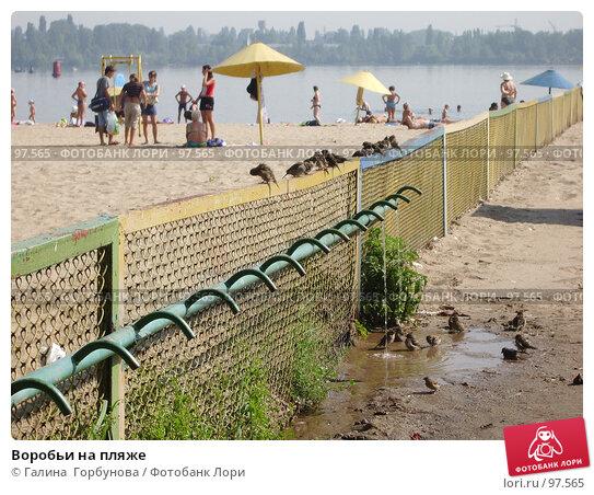 Воробьи на пляже, фото № 97565, снято 23 августа 2006 г. (c) Галина  Горбунова / Фотобанк Лори