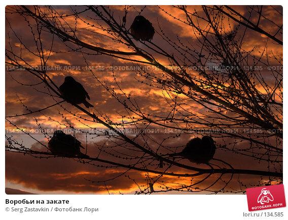Купить «Воробьи на закате», фото № 134585, снято 15 декабря 2004 г. (c) Serg Zastavkin / Фотобанк Лори