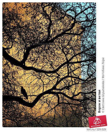 Купить «Ворон и ветви», фото № 229029, снято 25 апреля 2006 г. (c) Светлана Шушпанова / Фотобанк Лори