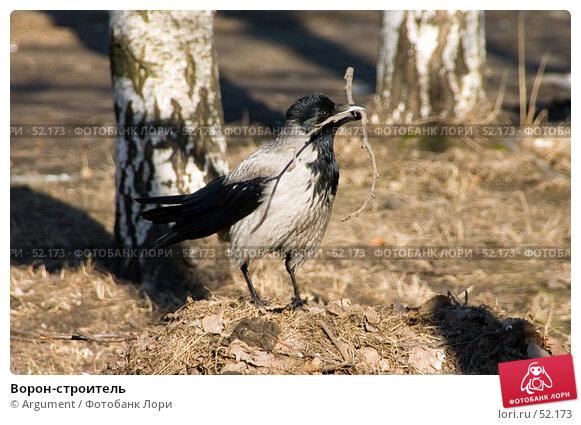 Купить «Ворон-строитель», фото № 52173, снято 16 апреля 2006 г. (c) Argument / Фотобанк Лори