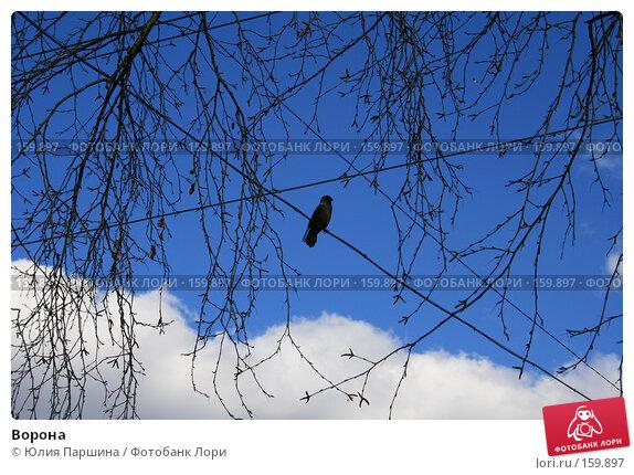 Ворона, фото № 159897, снято 1 апреля 2007 г. (c) Юлия Паршина / Фотобанк Лори