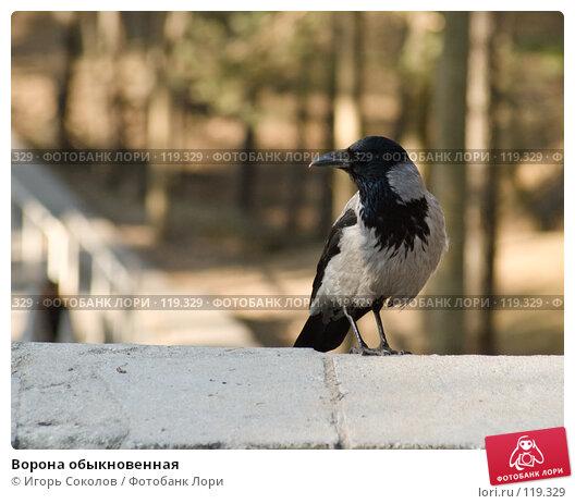 Ворона обыкновенная, фото № 119329, снято 25 апреля 2005 г. (c) Игорь Соколов / Фотобанк Лори