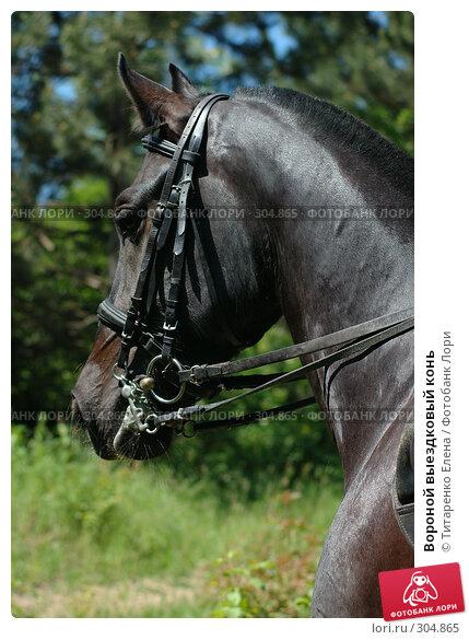 Вороной выездковый конь, фото № 304865, снято 29 мая 2008 г. (c) Титаренко Елена / Фотобанк Лори