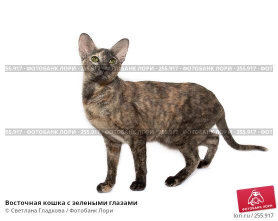 Купить «Восточная кошка с зелеными глазами», фото № 255917, снято 2 декабря 2007 г. (c) Cветлана Гладкова / Фотобанк Лори