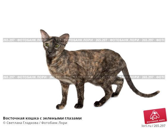 Купить «Восточная кошка с зелеными глазами», фото № 265297, снято 2 декабря 2007 г. (c) Cветлана Гладкова / Фотобанк Лори