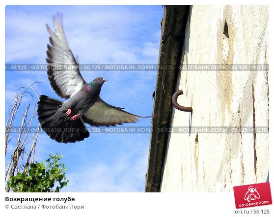 Возвращение голубя, фото № 56125, снято 26 июня 2007 г. (c) Светлана / Фотобанк Лори