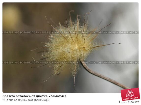 Все что осталось от цветка клематиса, фото № 156957, снято 27 марта 2007 г. (c) Елена Блохина / Фотобанк Лори