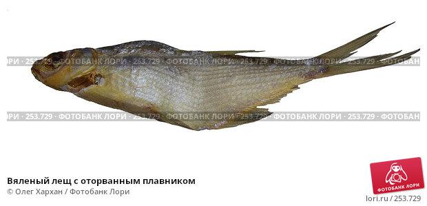 Вяленый лещ с оторванным плавником, фото № 253729, снято 20 марта 2008 г. (c) Олег Хархан / Фотобанк Лори