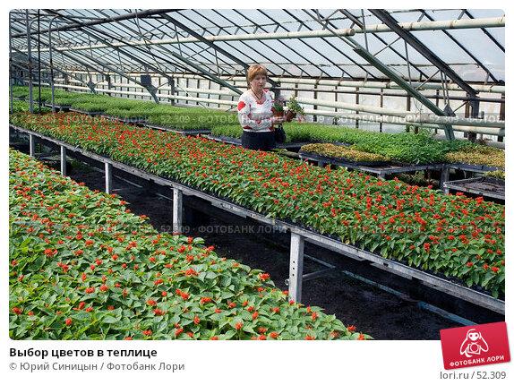 Выбор цветов в теплице, фото № 52309, снято 18 мая 2007 г. (c) Юрий Синицын / Фотобанк Лори