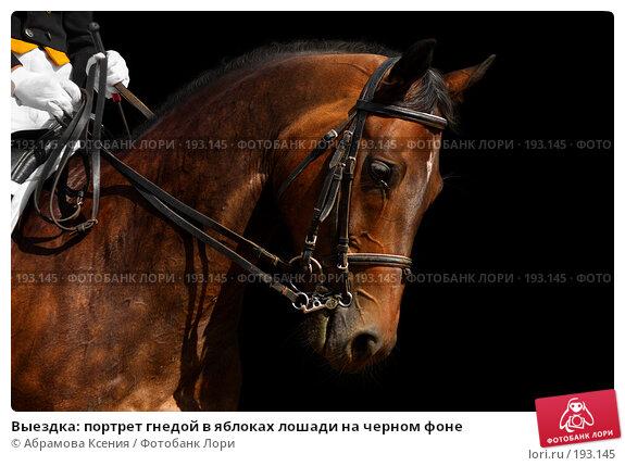 Выездка: портрет гнедой в яблоках лошади на черном фоне, фото № 193145, снято 12 августа 2006 г. (c) Абрамова Ксения / Фотобанк Лори