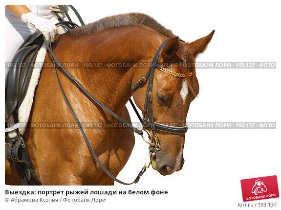 Выездка: портрет рыжей лошади на белом фоне, фото № 193137, снято 12 августа 2006 г. (c) Абрамова Ксения / Фотобанк Лори