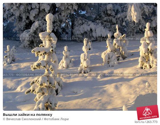 Вышли зайки на полянку, фото № 263773, снято 10 ноября 2006 г. (c) Вячеслав Смоленский / Фотобанк Лори