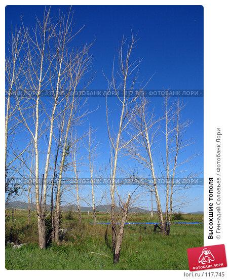 Высохшие тополя, фото № 117745, снято 31 августа 2007 г. (c) Геннадий Соловьев / Фотобанк Лори