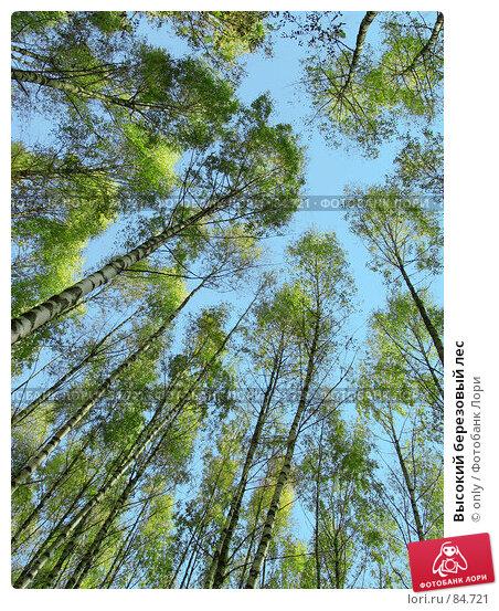 Высокий березовый лес, фото № 84721, снято 30 октября 2005 г. (c) only / Фотобанк Лори