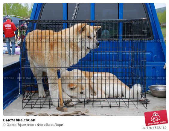 Купить «Выставка собак», фото № 322169, снято 21 ноября 2017 г. (c) Олеся Ефименко / Фотобанк Лори