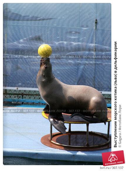 Выступление морского котика (льва) в дельфинарии, фото № 307137, снято 1 июля 2006 г. (c) Gagara / Фотобанк Лори