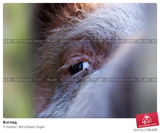 Взгляд, фото № 146649, снято 3 сентября 2004 г. (c) hunta / Фотобанк Лори