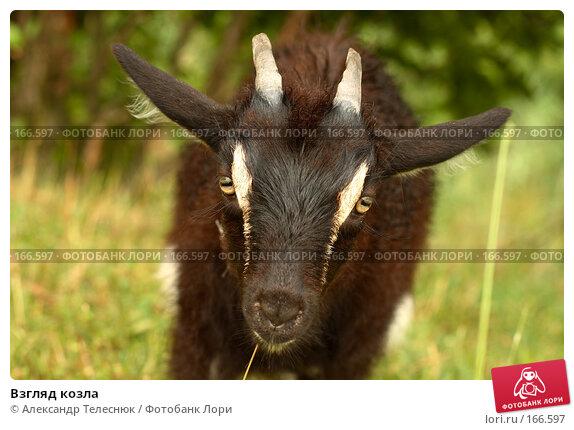 Взгляд козла, фото № 166597, снято 23 июня 2007 г. (c) Александр Телеснюк / Фотобанк Лори