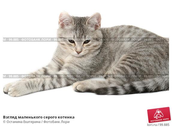 Взгляд маленького серого котенка, фото № 99885, снято 27 сентября 2007 г. (c) Останина Екатерина / Фотобанк Лори