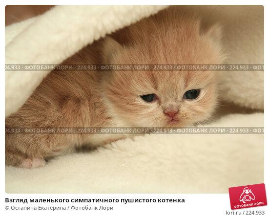 Взгляд маленького симпатичного пушистого котенка, фото № 224933, снято 4 марта 2008 г. (c) Останина Екатерина / Фотобанк Лори
