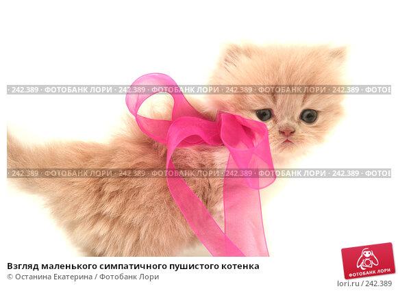 Взгляд маленького симпатичного пушистого котенка, фото № 242389, снято 17 марта 2008 г. (c) Останина Екатерина / Фотобанк Лори