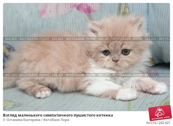 Взгляд маленького симпатичного пушистого котенка, фото № 242421, снято 28 марта 2008 г. (c) Останина Екатерина / Фотобанк Лори