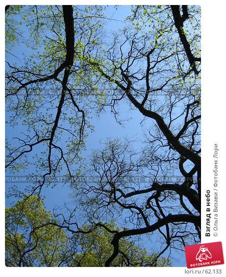 Взгляд в небо, эксклюзивное фото № 62133, снято 9 мая 2004 г. (c) Ольга Визави / Фотобанк Лори
