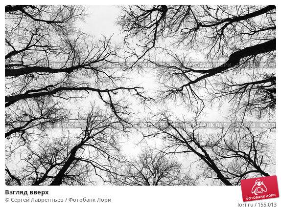Взгляд вверх, фото № 155013, снято 16 декабря 2007 г. (c) Сергей Лаврентьев / Фотобанк Лори