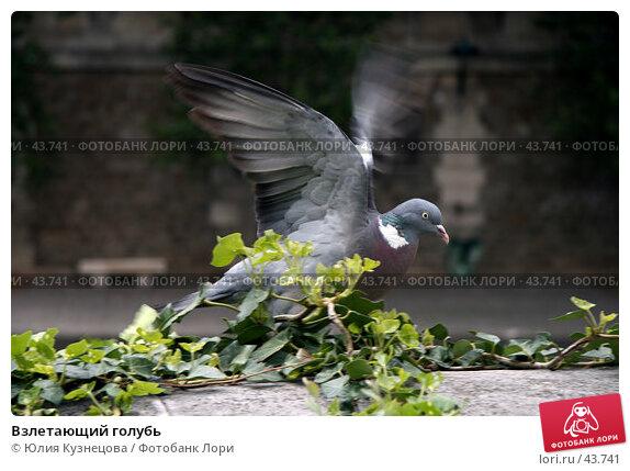Взлетающий голубь, фото № 43741, снято 7 мая 2007 г. (c) Юлия Кузнецова / Фотобанк Лори