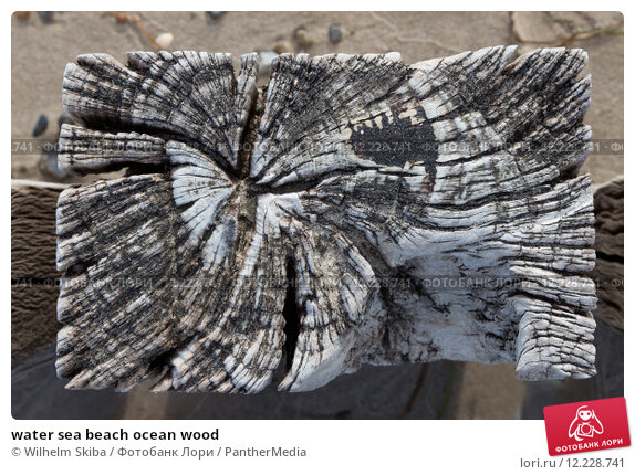 Купить «water sea beach ocean wood», фото № 12228741, снято 21 февраля 2019 г. (c) PantherMedia / Фотобанк Лори