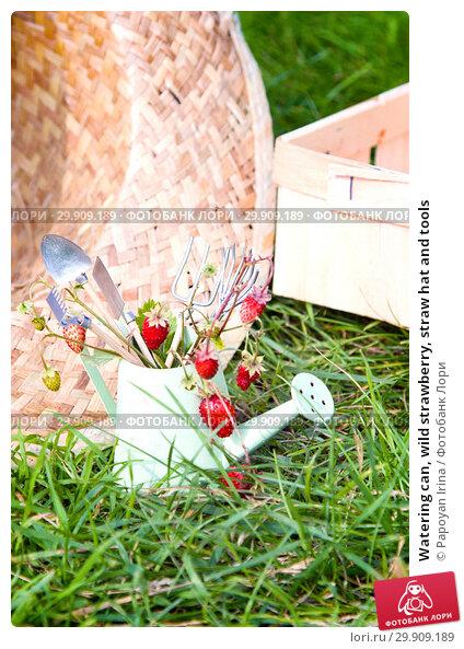 Купить «Watering can, wild strawberry, straw hat and tools», фото № 29909189, снято 19 июля 2018 г. (c) Papoyan Irina / Фотобанк Лори