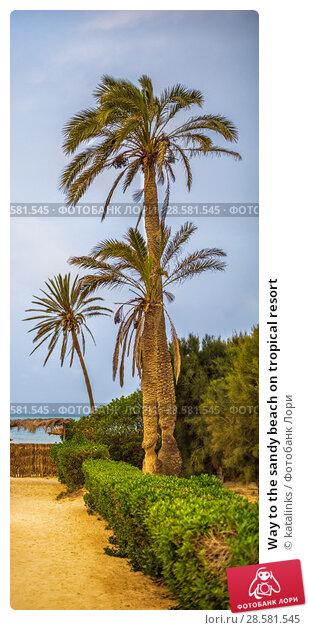 Купить «Way to the sandy beach on tropical resort», фото № 28581545, снято 17 мая 2018 г. (c) katalinks / Фотобанк Лори