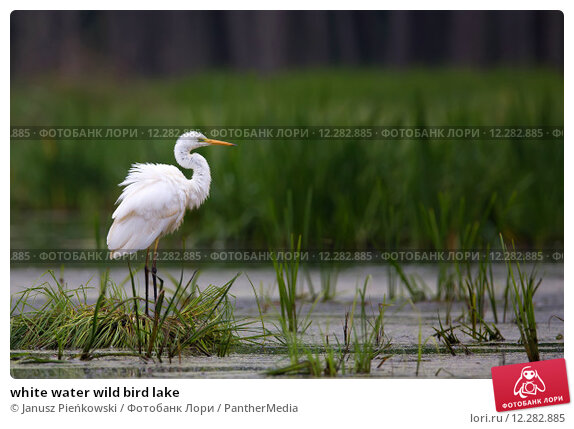 Купить «white water wild bird lake», фото № 12282885, снято 17 февраля 2019 г. (c) PantherMedia / Фотобанк Лори