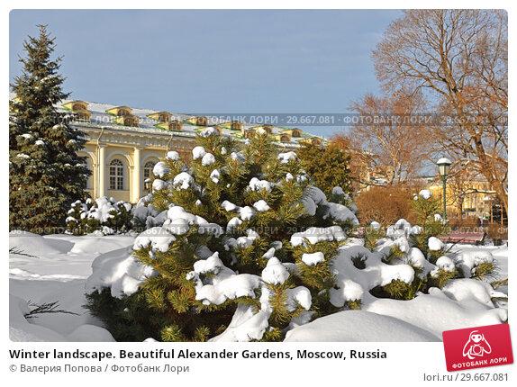 Купить «Winter landscape. Beautiful Alexander Gardens, Moscow, Russia», фото № 29667081, снято 9 января 2019 г. (c) Валерия Попова / Фотобанк Лори