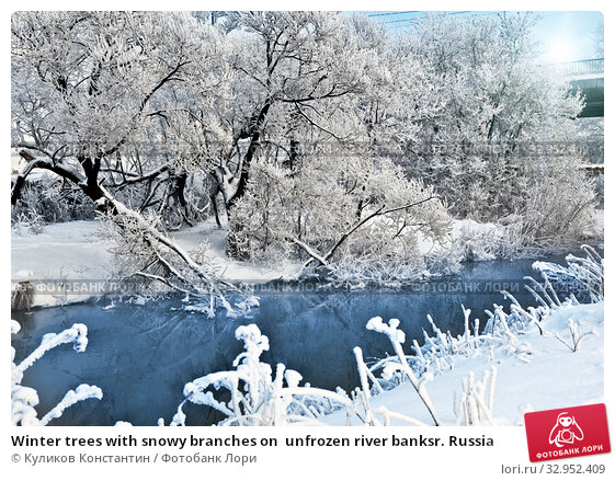 Winter trees with snowy branches on  unfrozen river banksr. Russia. Стоковое фото, фотограф Куликов Константин / Фотобанк Лори