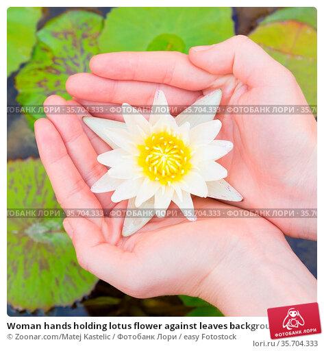 Woman hands holding lotus flower against leaves background. Стоковое фото, фотограф Zoonar.com/Matej Kastelic / easy Fotostock / Фотобанк Лори