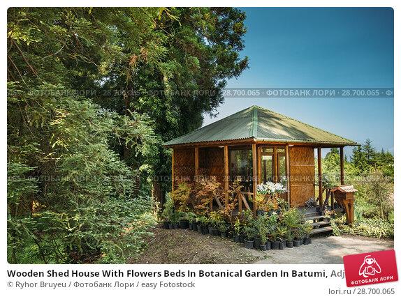 Купить «Wooden Shed House With Flowers Beds In Botanical Garden In Batumi, Adjara Georgia. Sunny Spring Or Summer Day.», фото № 28700065, снято 27 мая 2016 г. (c) easy Fotostock / Фотобанк Лори