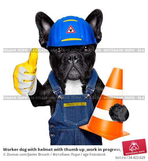 Worker dog with helmet with thumb up ,work in progress, traffic cone... Стоковое фото, фотограф Zoonar.com/Javier Brosch / age Fotostock / Фотобанк Лори
