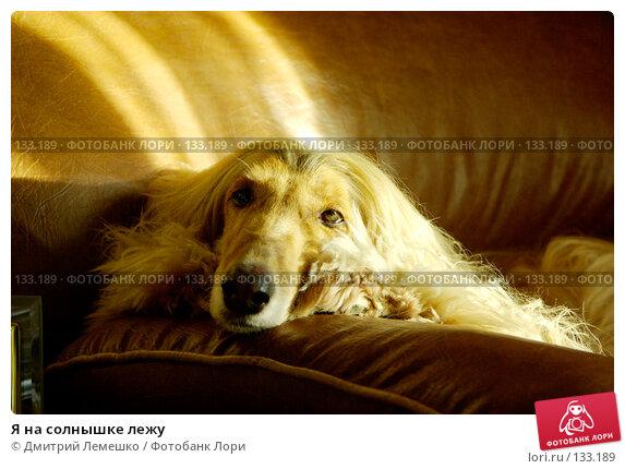 Я на солнышке лежу, фото № 133189, снято 14 ноября 2007 г. (c) Дмитрий Лемешко / Фотобанк Лори