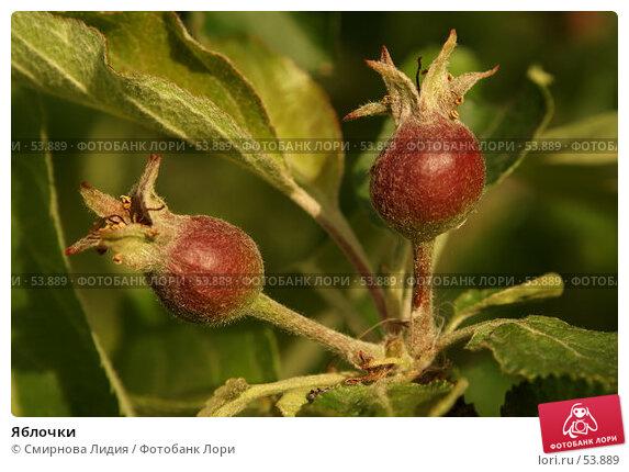 Яблочки, фото № 53889, снято 4 июня 2007 г. (c) Смирнова Лидия / Фотобанк Лори