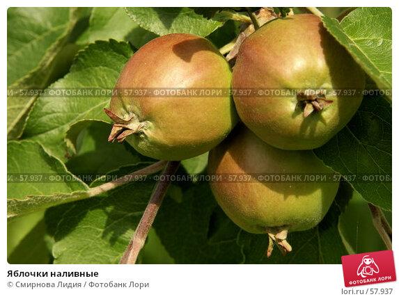 Яблочки наливные, фото № 57937, снято 1 июля 2007 г. (c) Смирнова Лидия / Фотобанк Лори