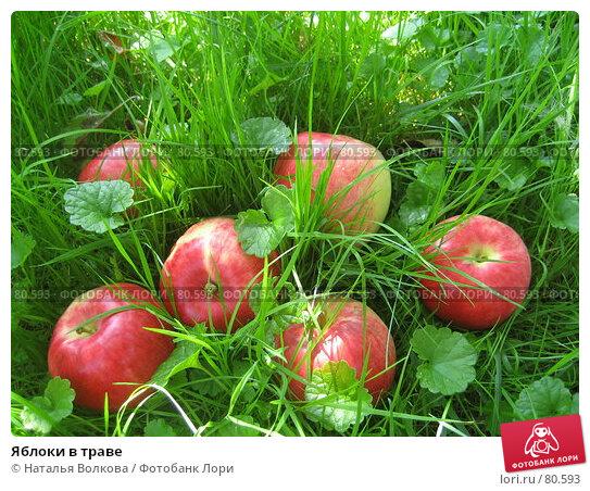 Яблоки в траве, фото № 80593, снято 12 августа 2007 г. (c) Наталья Волкова / Фотобанк Лори