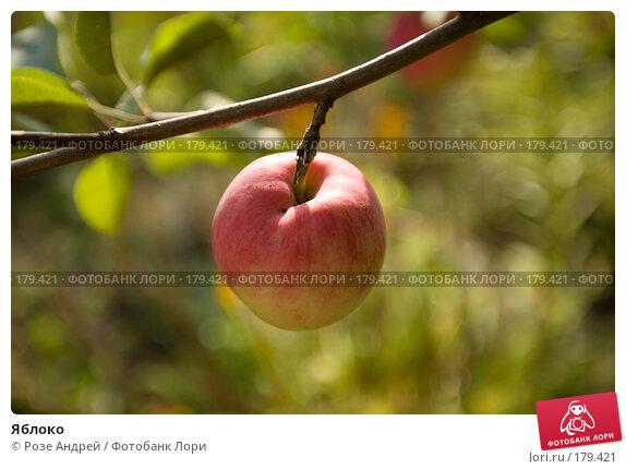 Купить «Яблоко», фото № 179421, снято 25 августа 2007 г. (c) Розе Андрей / Фотобанк Лори